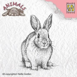 Nellie Snellen - Timbro Clear - rabbit